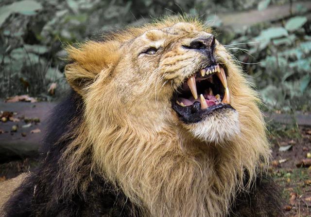 Help, een bedrijfsvideo! 4 redenen om die 'leeuwen en beren' te verslaan